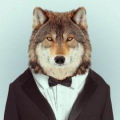 casualwolf
